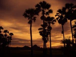 Palmen vor Sonnenuntergang